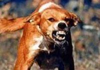 L'ira: la distropia aggressiva